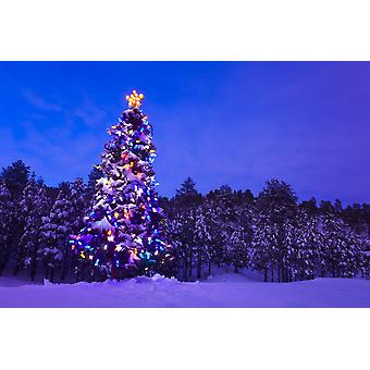 Decorated & Lit Christmas Tree In A Spruce Forest In Tres Piedras Carson National Forest New Mexico PosterPrint
