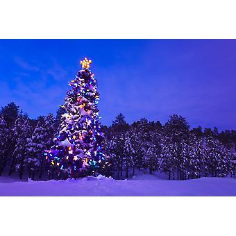 Ingerichte & verlichte kerstboom In een bos van de spar In Tres Piedras Carson National Forest New Mexico PosterPrint