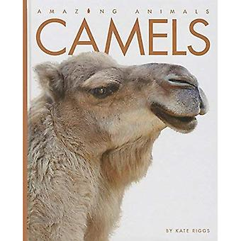 Camels (Amazing Animals (Creative Education Hardcover))