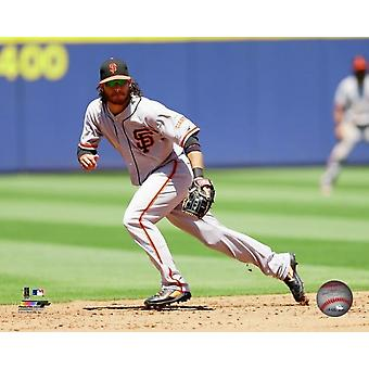 Brandon Crawford 2014 Action Photo Print
