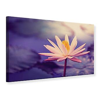 Canvas Print Lotus At Sunset