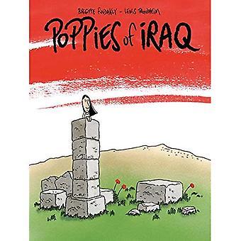 Vallmo i Irak