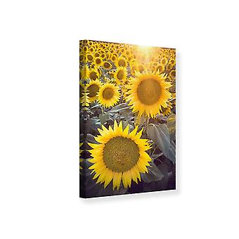 Canvas Print Sunflower Perspective