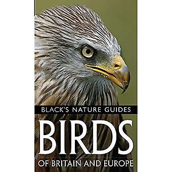 Fåglar i Storbritannien och Europa (Blacks naturguider) (Blacks naturguider)