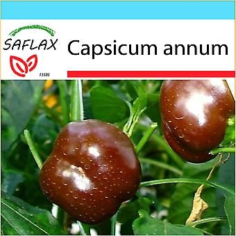 Saflax - Gift Set - 10 seeds - Pepper - Sweet Chocolate x - Paprika - Sweet Chocolate X - Peperoncino Sweet Chocolate - Pimiento sweet chocolate - Paprika - Sweet Chocolate x