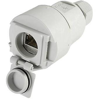 STX V6 RJ45 coupler socket option 6 Connector, straight Number of pins: 8P8C J00020A0437 Light grey Telegärtner J00020A0437 1 pc(s)