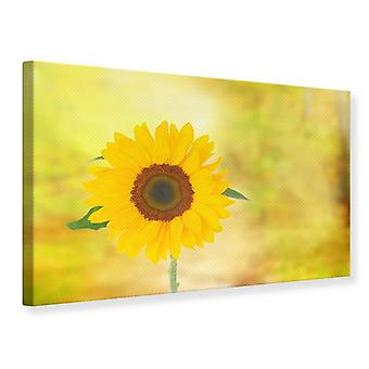 Canvas Print Sunflower