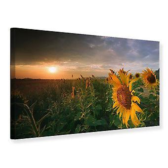 Leinwand drucken Sonnenblumen im Spiel des Lichts