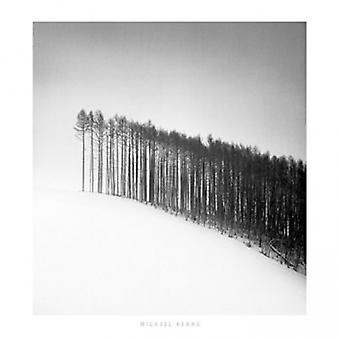 Forest Edge Hokuto Japan 2004 Poster Print by Michael Kenna (28 x 28)