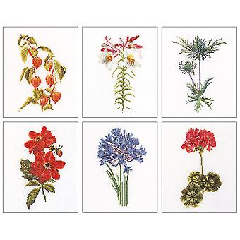 Floral Studies 2 On Aida Counted Cross Stitch Kit-6.75