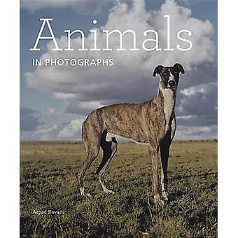 Animals in Photographs by Arpad Kovacs - 9781606064412 Book