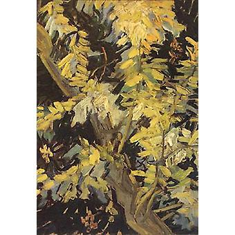 Blossoming Acaia Branches, Vincent Van Gogh, 32(5), x24cm