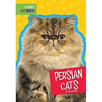 Persian Cats (Favorite Cat Breeds)