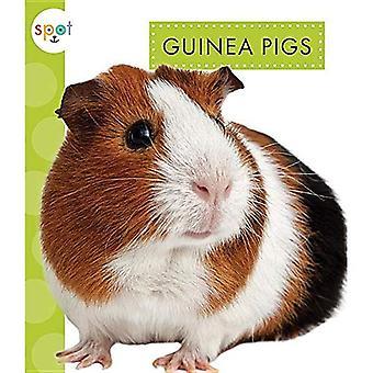 Guinea Pigs (Spot Pets)