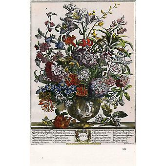 Roberty Furber - Twelve Months of Flowers July Poster Print Giclee