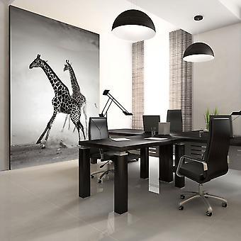 Fototapete - Giraffen