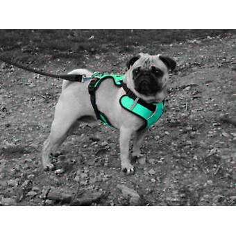 Num'axes Sport Coneckt Harness -Blue (Dogs , Collars, Leads and Harnesses , Harnesses)