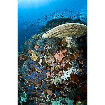 Scena della barriera corallina con coralli e pesci Komodo Indonesia Poster stampa