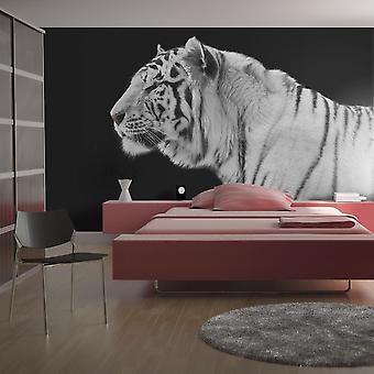 Tapeter - vit tiger