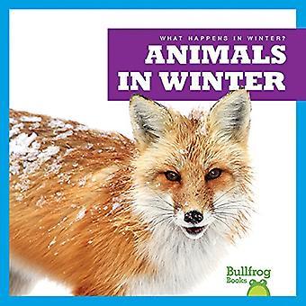 Animals in Winter (What Happens in Winter?)