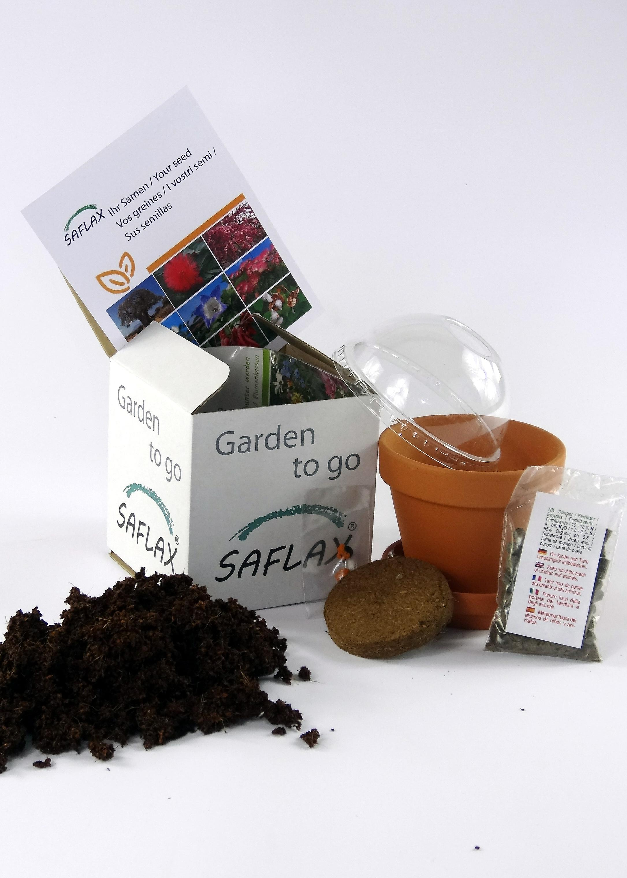 Saflax - Garden to Go - 200 seeds - Common Thyme - Thym commun - Timo comune - Tomillo - Echter Thymian