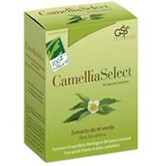 100% Natural Camelliaselect 60 capsules