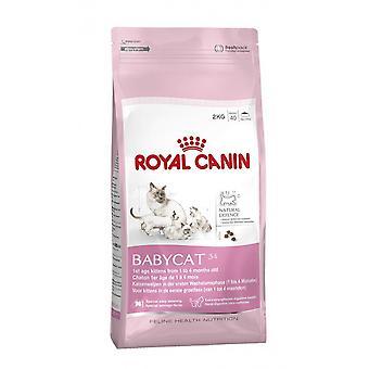 رويال كانين Babycat 34 هريرة كاملة القط الأغذية الجافة 2 كجم