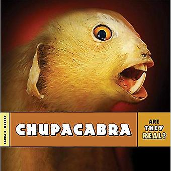 Chupacabra (Are They Real?)