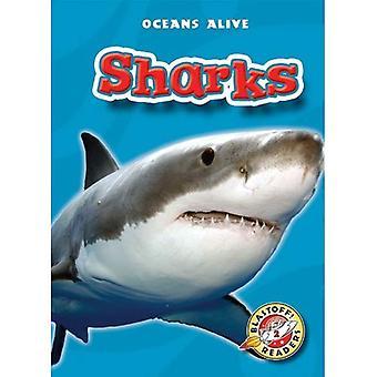 Requins (océans vivants)