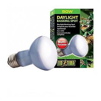 Exo Terra Daylight Basking Spot Lamp (Reptiles , Lighting , Light Bulbs)
