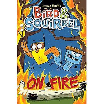 Bird & Squirrel on Fire (Bird & Squirrel)
