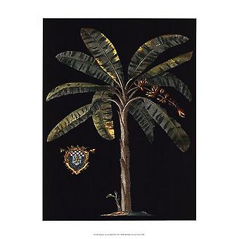 Palm & Crest on Black II Poster Print by Vision studio (13 x 19)