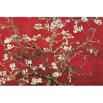 Mandel Blossom i Red plakat Print af Vincent van Gogh (36 x 24)