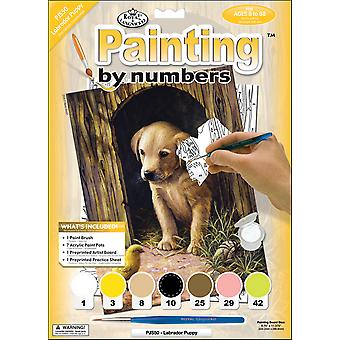 Junior Small Paint By Number Kit 8 3 4