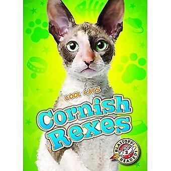Cornish Rexes (Cool Cats)