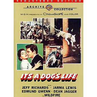 It's a Dog's Life (Remastered) [DVD] USA import