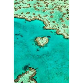 Heart Reef I Poster Print by Larry Malvin