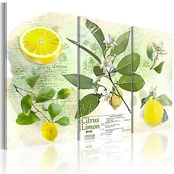 Billede - Fruit: lemon