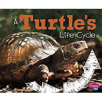 A Turtle's Life Cycle (Explore Life Cycles)