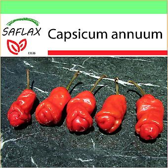 Saflax - Garden to Go - 10 seeds - Chili - Peter Peppers Penis Chili - Piment - Peter Peppers Pénis Chili - Peperoncino Peter Peppers Penis - Pimientas de chile Peter en forma de pene - Chili - Peter Peppers Penis Chili