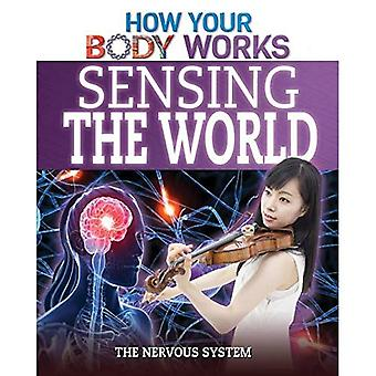 Sensing the World: The Nervous System (How Your Body Works)