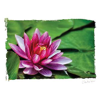 Artist Series Photo Card W/Envelope-Among The Lily Pads C0006E