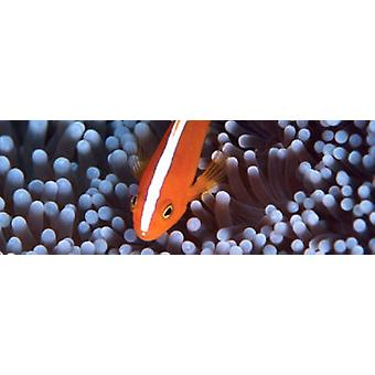 Aquarium Systems Hybrid Marino tube T5 24 W 60/40 (Fish , Lighting , Florescent Tubes)
