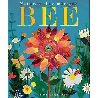 Biene: Natur kleine Wunder