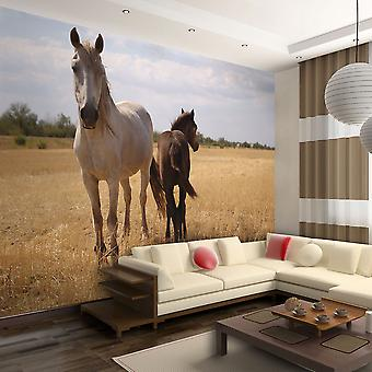 Wallpaper - Horse and foal