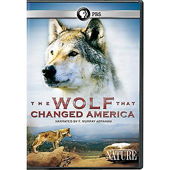 Nature: The Wolf That Changed America [DVD] USA import