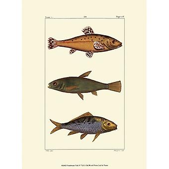Freshwater Fish IV Poster Print by Pretre (10 x 13)