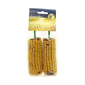 Boredom Breaker Corn On The Cob 2pk (Pack of 8)