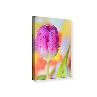 Lienzo de impresión el tulipán en el rocío de la mañana