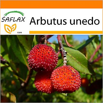 Saflax - Garden in the Bag - 50 seeds - Strawberry Tree - Arbousier - Albatro - Árbol de las fresas - Erdbeerbaum